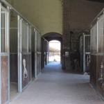 I nuovi box cavalli